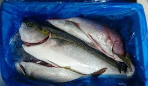 高知県大月町鮮魚2