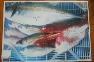 島根県浜田市鮮魚1