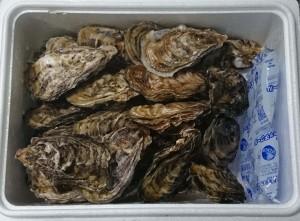 三重県志摩市牡蠣2