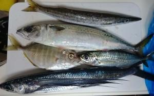 高知県須崎市鮮魚3