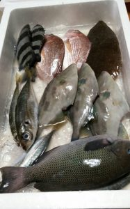 石川県能都町鮮魚2