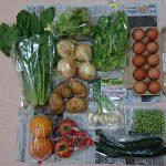 長崎県松浦市から『旬のお野菜+産みたて濃厚玉子』が届きました