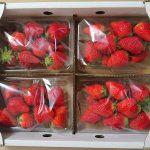 高知県宿毛市から『佐田さんのイチゴ(農家直送)4パック』が届きました