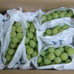 山梨県富士川町から『シャインマスカット2.5kg』が届きました