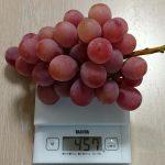 長崎県時津町から超大粒の『クイーンニーナ2kg』を頂きました