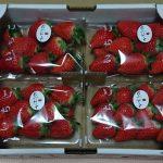 佐賀県太良町から『佐賀県太良町産 苺「かおりの」レギュラーパック4P』が届きました