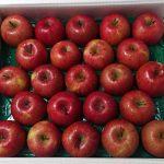 秋田県鹿角市から『かづのりんご「サンふじ」10kg』が届きました