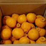 佐賀県太良町から『見陣農園の月の雫みかん(不知火)7kg』が届きました