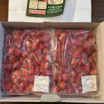 鹿児島県日置市から『冷凍いちご3.2kg』が届きました