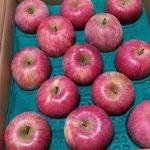 福島県国見町から『蜜たっぷり!「ふじりんご」10kg』が届きました