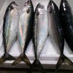 茨城県神栖市から『朝獲れ直送!鮮度抜群の獲れたて鮮魚 5kg』が届きました