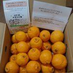 長崎県時津町から『訳あり 長崎 不知火 約8kg』が届きました
