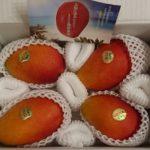 沖縄県南城市から『生産者直送マンゴー 1.5kg〜2kg』が届きました