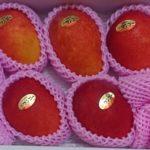 大阪府泉佐野市から『国産マンゴー 約1.4kg(3〜5玉)』が届きました